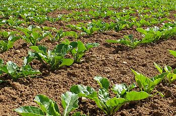 Evolution de la réglementation phytosanitaire pour 2020
